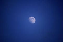 Moon. Almost full moon on a blue background royalty free stock images
