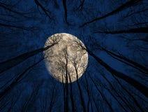 moon Arkivbilder