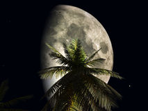 Moon. And palmtree Royalty Free Stock Photography