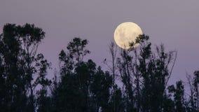moon stock video