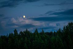 Moon Above Forest during Night Time stock photo