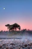 Moon above frozen heath Royalty Free Stock Photo