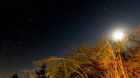 Moon appena sopra l'albero con le stelle nei precedenti Fotografie Stock