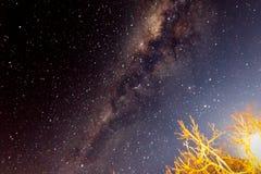 Moon appena sopra l'albero con le stelle nei precedenti Fotografia Stock Libera da Diritti