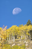 Moon and aspens Stock Image