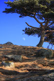 The Moon (on background) 2. Near Vladivostok, Russia, Far-East. Winter Royalty Free Stock Photography