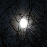 Moon behind branches. Moon shines through branches royalty free stock images