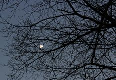 Moon behind dry branches. stock photos
