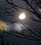 Moon behind leafless twigs. Leafless branches of a cherry tree lighted by half moon stock image