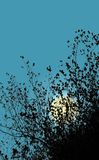 Moon behind the leaves. Abstract background, illustration. Branches silhouette stock illustration