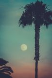 Moon Behind Palm Tree. Palm Tree at Night With Moon in the Background and Copy Space Royalty Free Stock Image