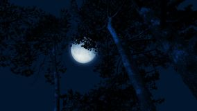 Moon Behind Tall Forest Trees In The Wind. Full moon behind large forest trees that sway in the wind on stormy night stock footage