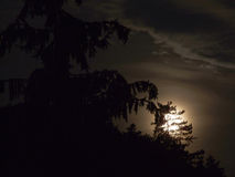 Moon behind tree Royalty Free Stock Photos