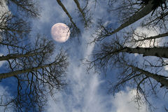 Moon Behind Tree Stock Photo