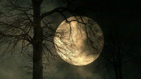 Moon behind tree. mystery night background