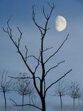 Moon behind trees. Moon behind alder trees. Twilight shot Royalty Free Stock Image