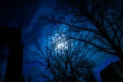Moon behind trees Royalty Free Stock Photo