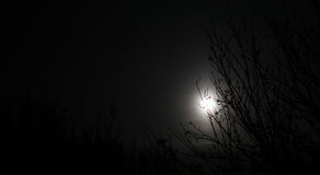 Moon behind trees Royalty Free Stock Image