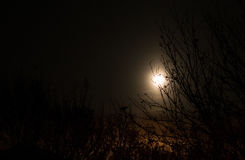Moon behind trees Stock Images
