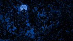 Full Moon Behind Dense Tree Foliage