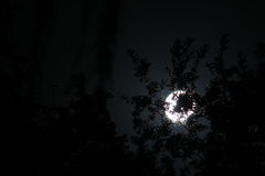 Moon behind the trees Stock Images