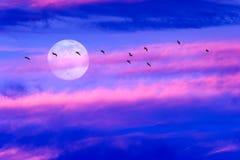 Moon Birds Royalty Free Stock Photo