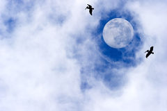 Moon Birds. Are tow silhouetted birds flying by a bright full moon with wispy clouds in a deep blue sky Stock Images