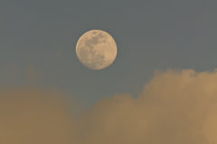 Moon at blue sky Stock Images