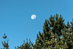 The moon with blue sky in day time behind blurred twigs of trees in foreground Royalty Free Stock Image
