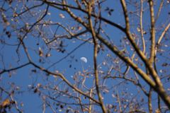 The Moon and brach of tree. Around Royalty Free Stock Image