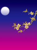 Moon and branch stock photos