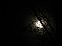 Moon and Branches Stock Photography