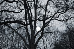 Moon between the branches Stock Images