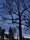 Moon through the branches Stock Photos