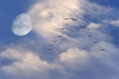 Moon Clouds Birds Flying Stock Photos