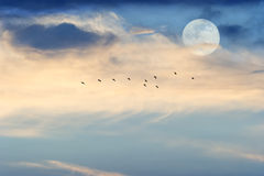 Moon Clouds Stock Photography