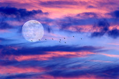 Moon Clouds Skies Birds Silhouette Stock Image