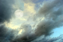 Moon Clouds Skies Birds Silhouette Stock Image