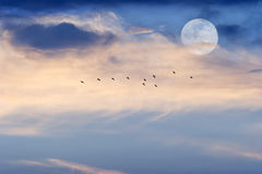 Moon Clouds Skies Birds Royalty Free Stock Image
