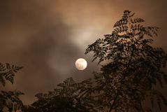 Moon in the cloudy night Royalty Free Stock Photos