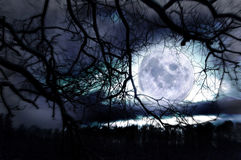 Moon conceptual image. Moon in dark forest Royalty Free Stock Photo