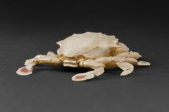 Moon crab in dark back Royalty Free Stock Image