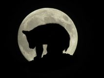 Moon crossings. Full moon silhouette with bear cub Royalty Free Stock Photos