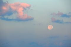 Moon at dawn. Full moon in the western sky at dawn Royalty Free Stock Photos