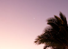 Moon in dawn sky by palm trees Royalty Free Stock Photos