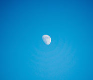 Moon in daylight Royalty Free Stock Images