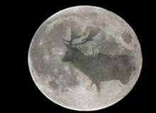 Moon dreaming. Wake up by full moon Stock Photos