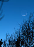 Moon earthshine. Astronomy abstract sky background: the earthshine reflecting off the Moon visible through tree branches during conjunction with planet Venus Royalty Free Stock Image