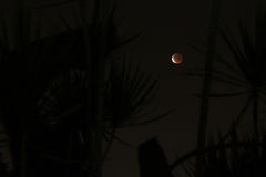 Moon Eclipse Royalty Free Stock Photo