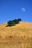 Moon and Field Stock Photo